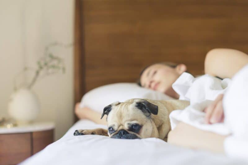 Regular exercise contributes to mental health Pug sleeping beside woman on bed